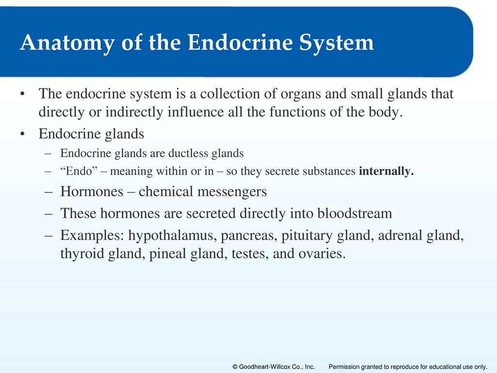 The Endocrine System 8 Lesson 8 1 Functions And Control Of The Endocrine System Lesson 8 2
