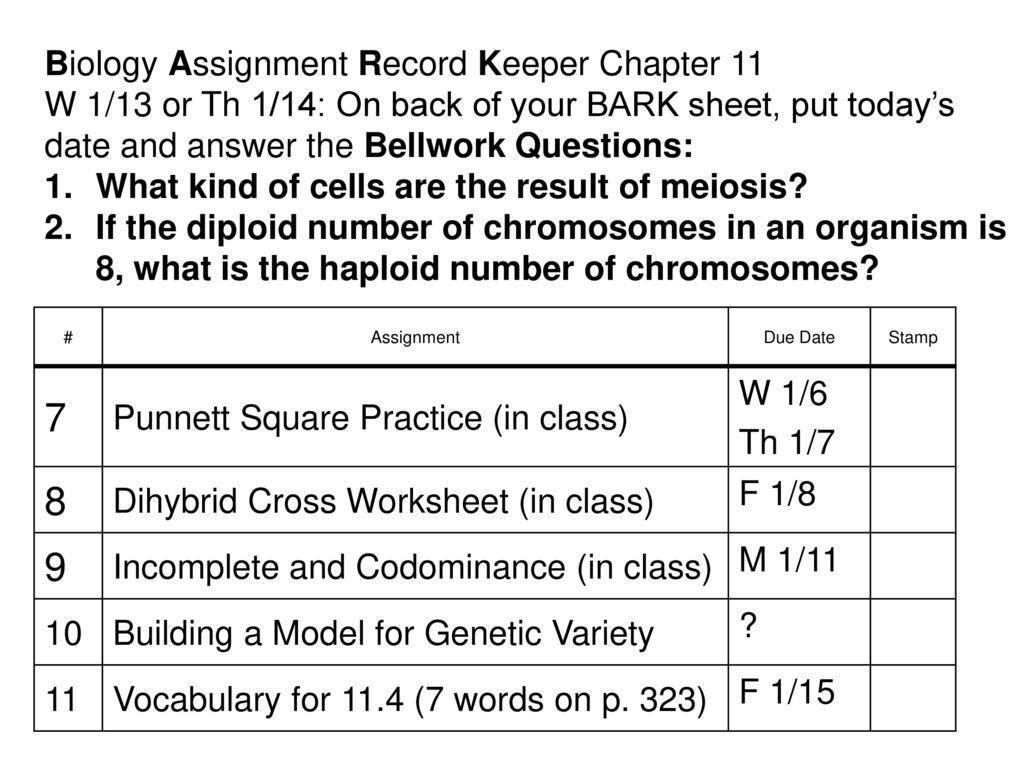 Biology Chapter 10 Dihybrid Cross Worksheet Answer Key