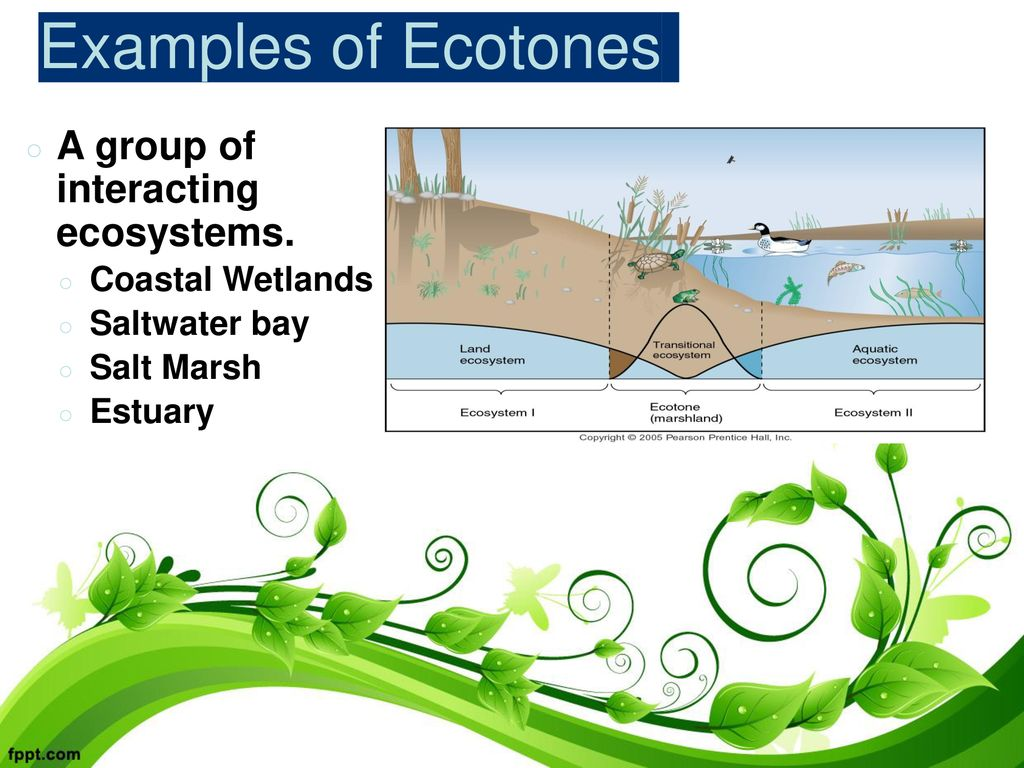 Day 1: Ecosystems and Ecotones - ppt download