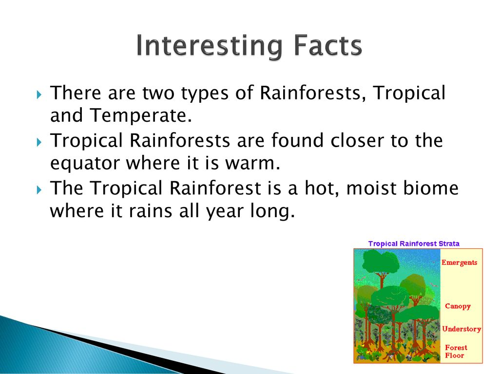 Here is a complete overview of the tropical rainforest biome, rain forest health, habitat, and these forests' importance to our earth. Rainforest Biomes By Dennys Padilla Ppt Download