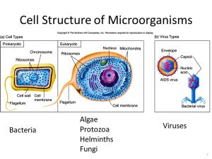 Main Themes of Microbiology  ppt video online download