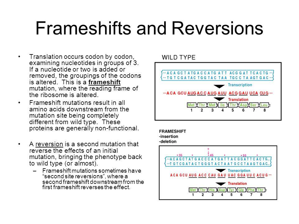 3 Types Of Frameshift Mutations | Framess.co