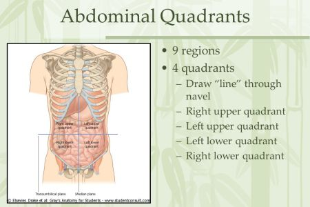 interior surface anatomy abdomen » 4K Pictures | 4K Pictures [Full ...