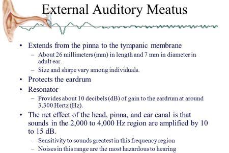 interior internal auditory canal diameter » Electronic Wallpaper ...