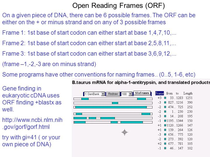 How Many Open Reading Frames Are There In Dna | Viewframes.org
