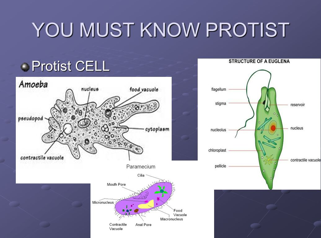 Cell And Their Organelles
