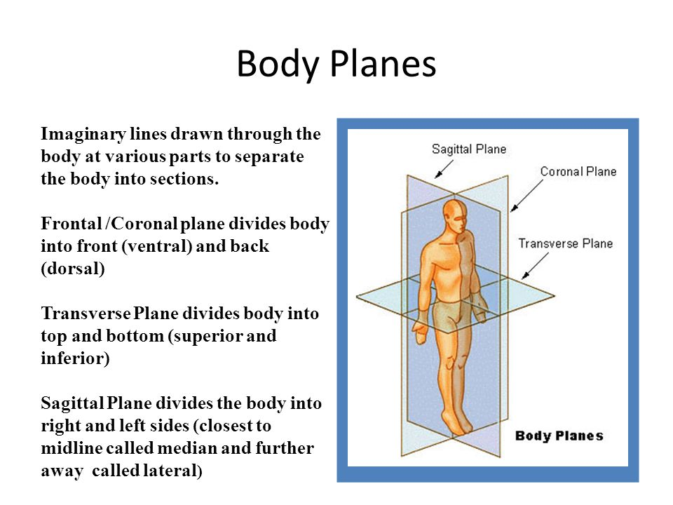 midsagittal plane diagram