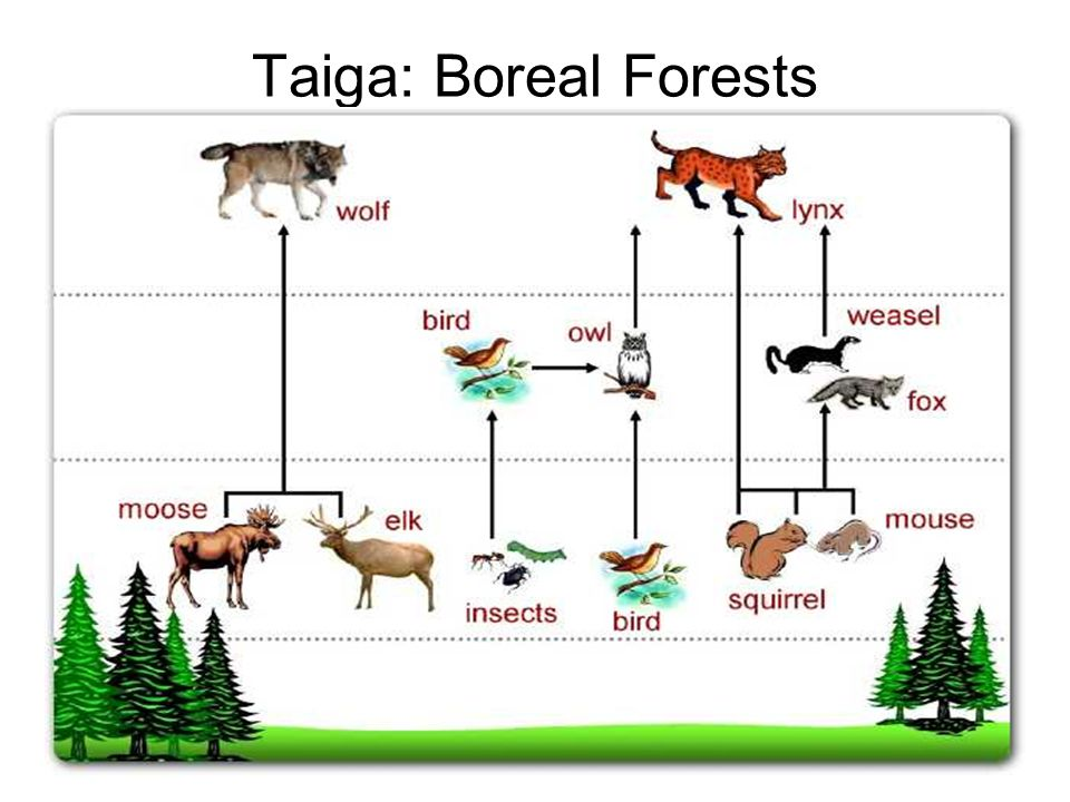 Producers in a food chain are then eaten by organisms called _____. Food Webs Most Food Chains Have No More Than Four Or Five Links There Cannot Be Too Many Links In A Single Food Chain Because The Animals At The End Ppt