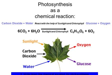 Photosynthesis reaction hd images wallpaper for downloads easy primary processes in the photosynthetic reaction center holten figure wild type reaction center and photochemical events photosynthesis the light reactions publicscrutiny Gallery