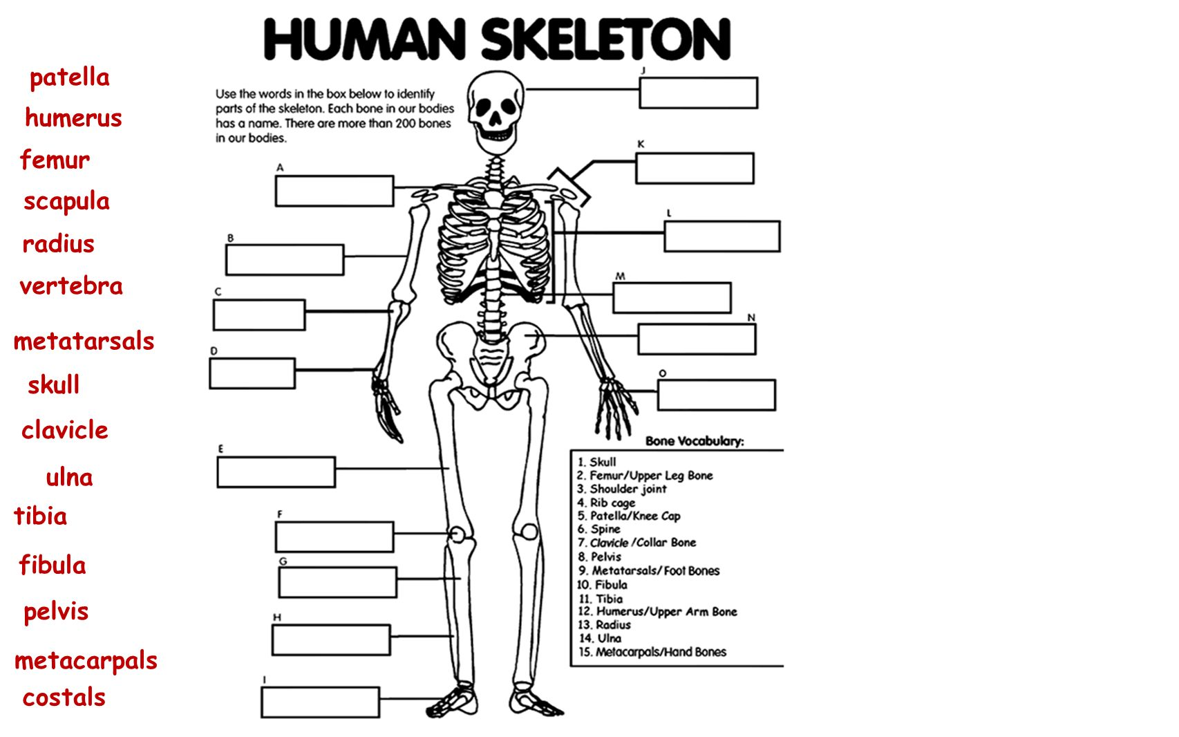 The Skeletal System Chapter Ppt Video Online Download