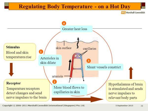 Skin & Temperature Control - ppt download