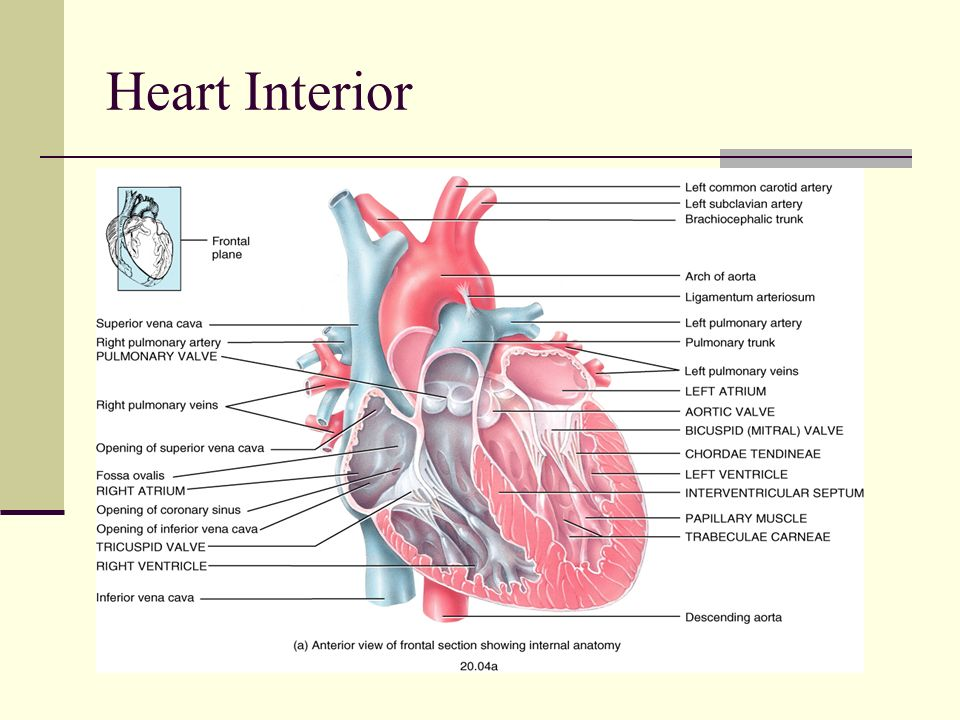 interior inferior heart attack interior doors » Full HD MAPS ...