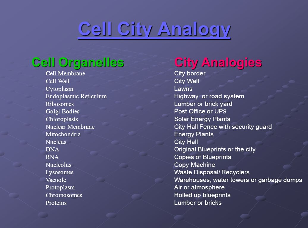 Cell City Answer Key Diagram