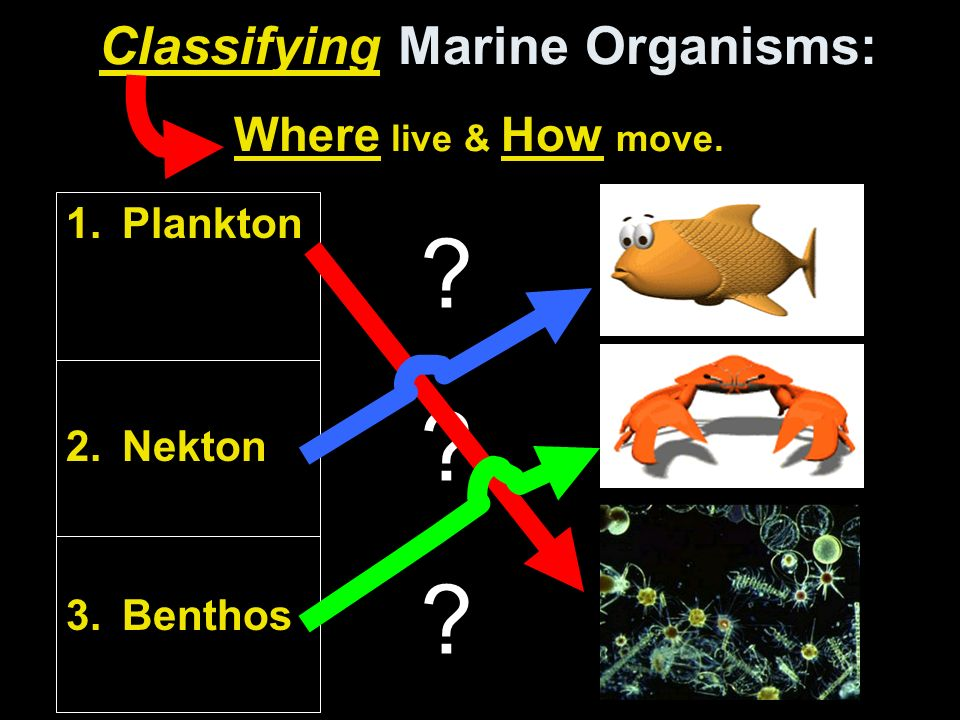 Organisms Live Abyssal
