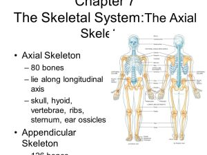 The Skeletal System: The Axial Skeleton Lecture Outline