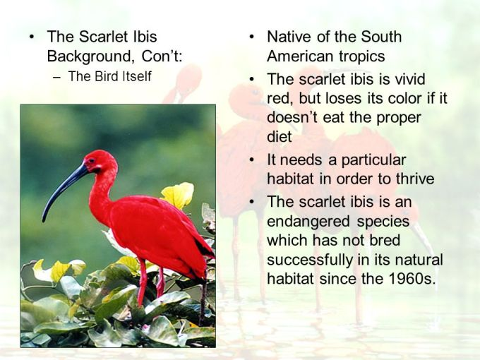 Red Images In The Scarlet Ibis Siewalls