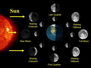MOON PHASES (LUNAR CYCLE)  ppt video online download