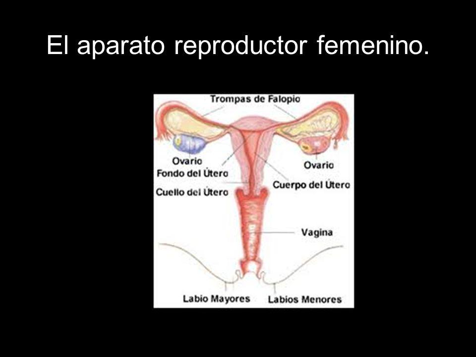 Encantador Diagrama De La Anatomía Femenina Marcada Galería ...
