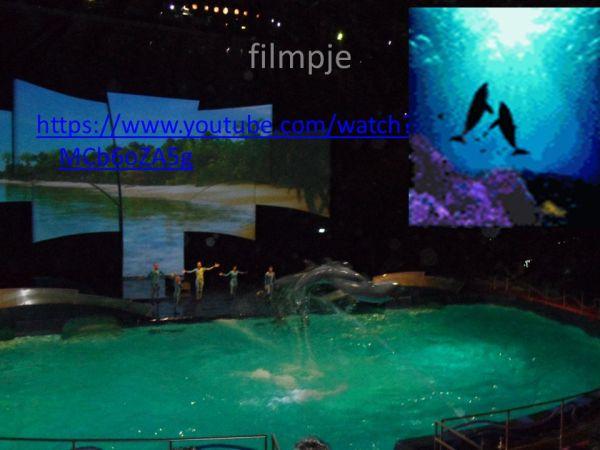 Dolfijnen Door: Lieke. - ppt video online download