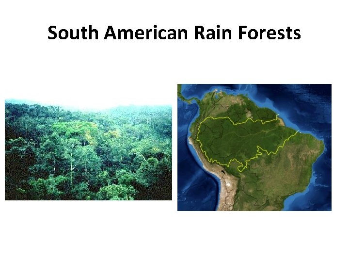 Most rainforests get at least 75 inches of rain with many getting well over 100 inches in areas. South America South America Geographical Facts 1 South