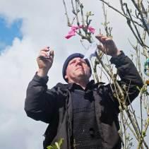 Christy fixes ribbons to the May Bush - photo Kathleen Culliton