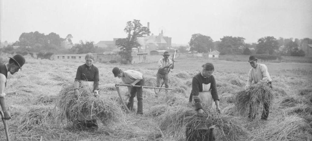 Irish Flax harvesters