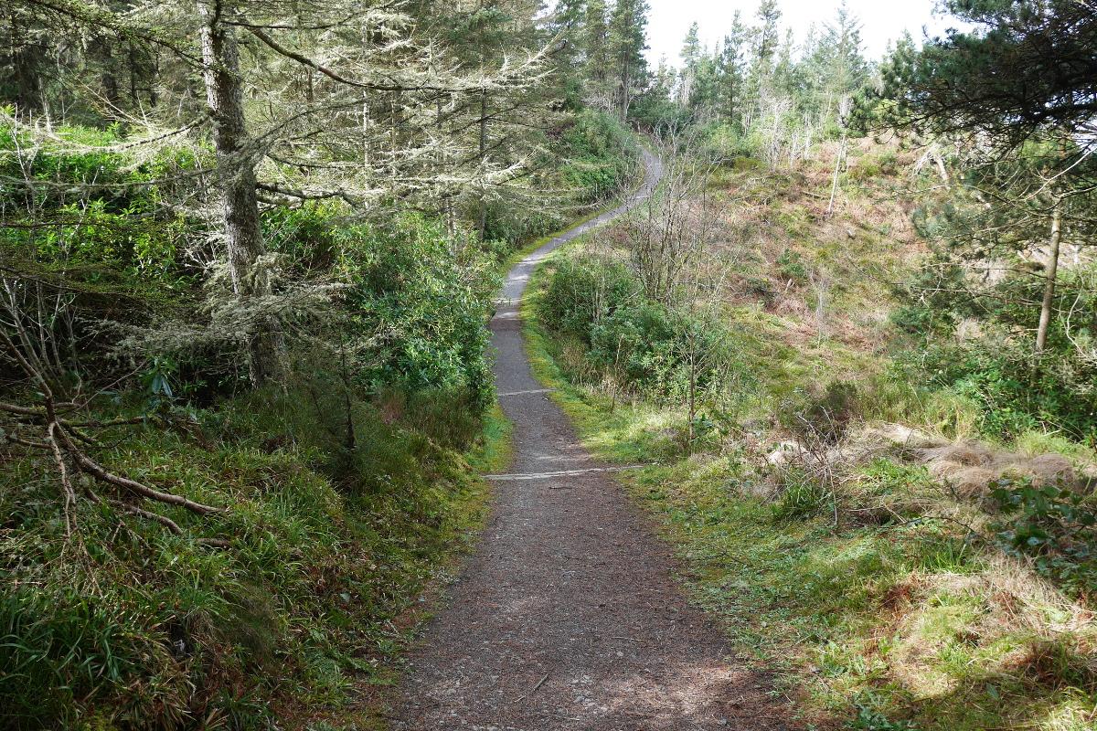 Deerpark Forest