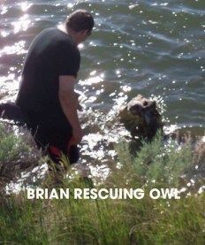 brian and owl w text