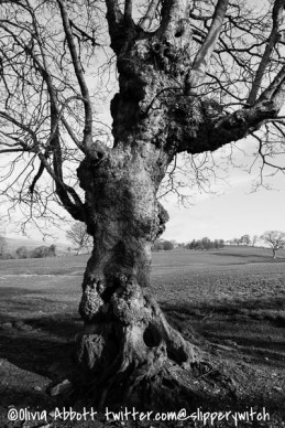 Outside the tree (black and white)