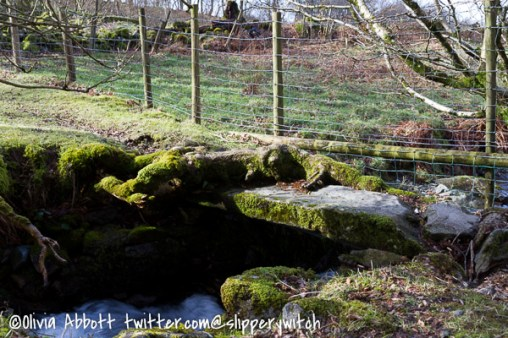A bridge at the bottom of the Pony Path. Judging by the tree root on top of it, it must be rather old...