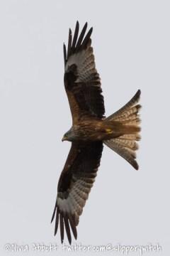 kite 3