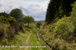 prysor railway walk-2