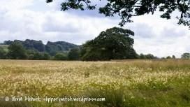 meadowsweet-1