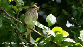 spotty fly-4
