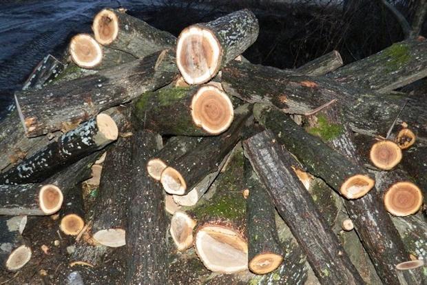 Арестуваха шестима за кражба на дървен материал