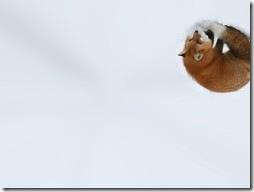 Firefox Wallpaper #9