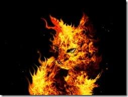 Firefox Wallpaper #7