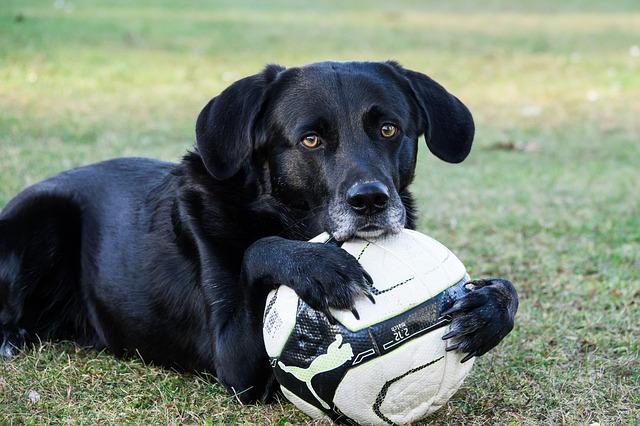 pas grli fudbalsku loptu