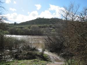 Salinas River Flows into Access Path from Lawrence Moore Park, Paso Robles
