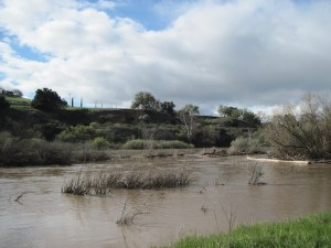 March 21, 2011-- Salinas River Comes All the Way to the Grassy Bank