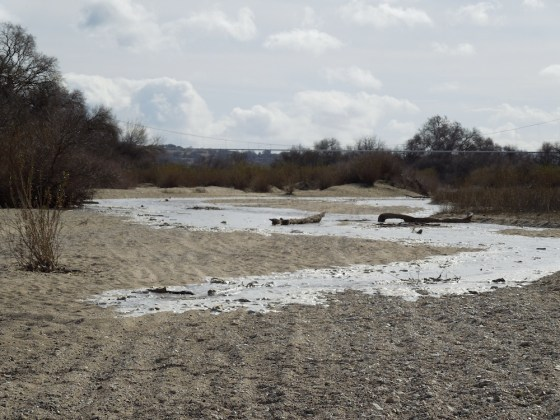 The Salinas River Flows Toward Me on January 21