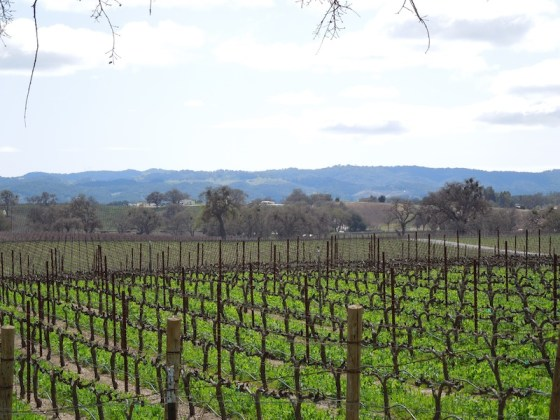 I love photographing vineyards. This one is on Arbor Road in Paso Robles