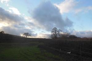 Cloudy sky seen from Zenaida Vineyard