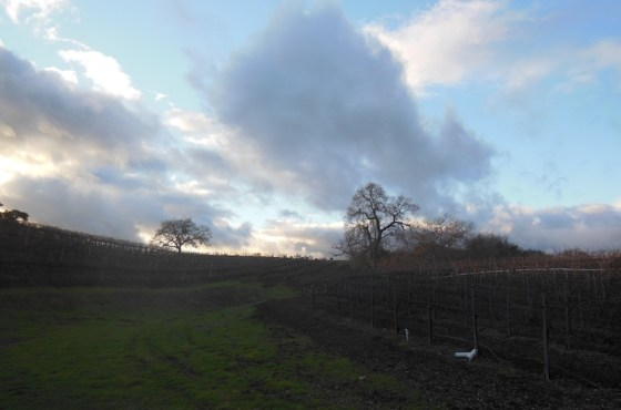 Cloudy sky seen from Zenaida Vineyard