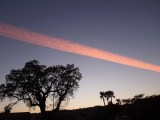 Large Contrail Strip Across the Sky March 16
