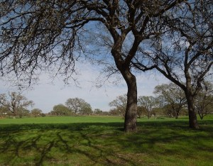 The Green Grounds around Peachy Canyon's Tasting Room