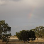 Rainbow over Veris Vineyard