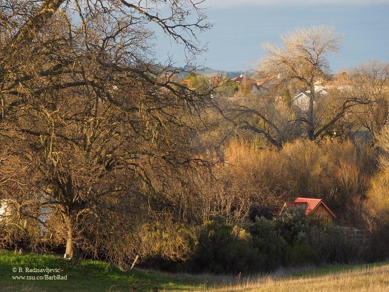 Looking Northwest from Hillock near Bennett Way