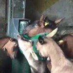 """Aj koza má právo na """"svoj deň"""" V Amerike dostanete """"všetko"""". Aj automatický škrabač…"""