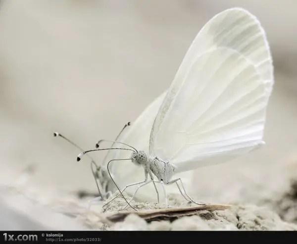Fairy Like Butterfly